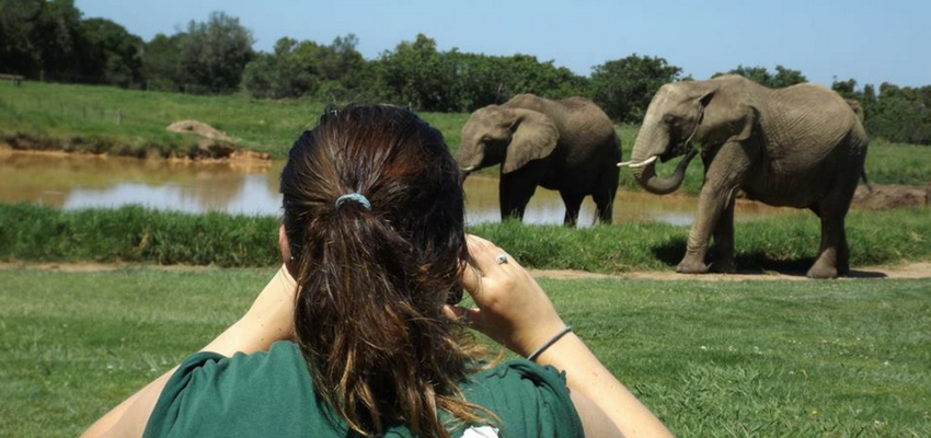Volunteer with elephants South Africa