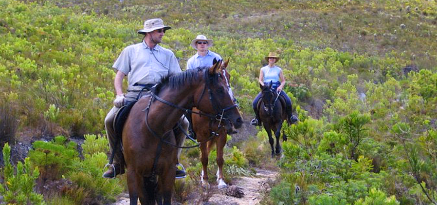 Horseriding Trails Hermanus