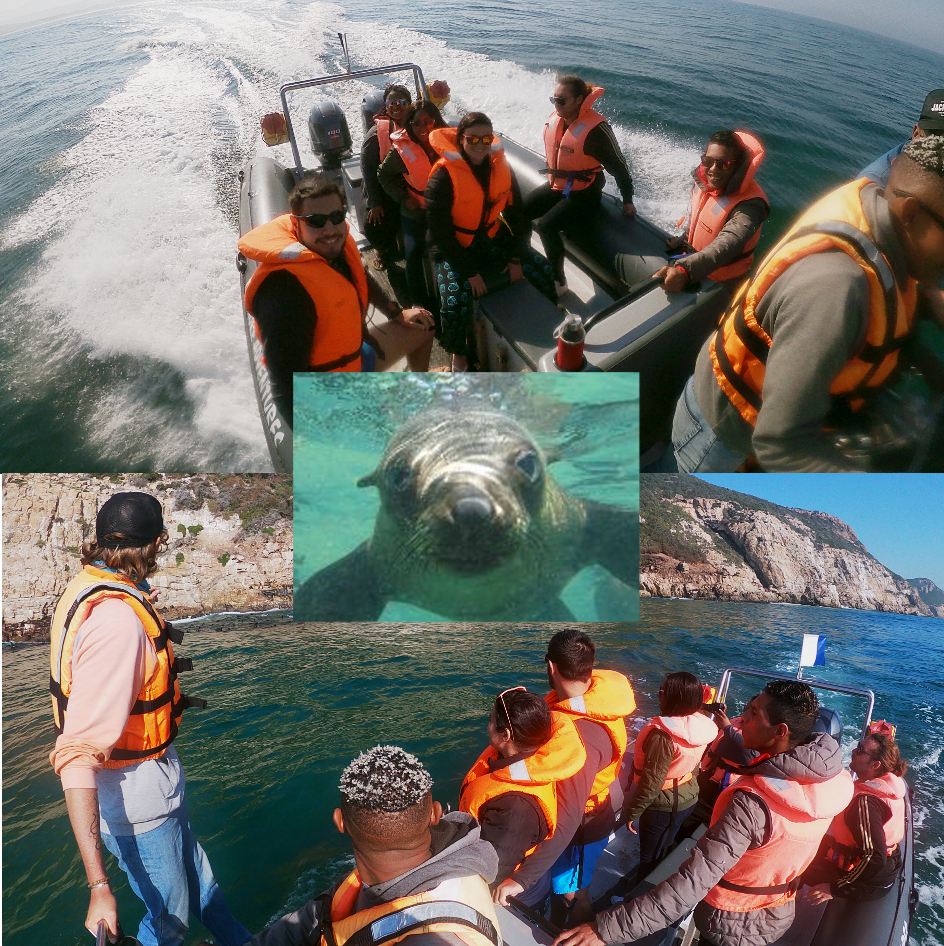 Seal and Shark Viewing at Robberg Peninsula