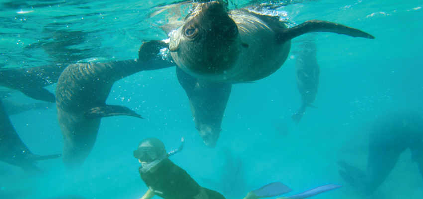 Seal Diving South Africa